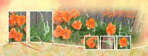 Poppies-stash
