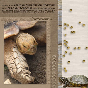 Tuesday-Newsletter-Challenge--close-up turtle